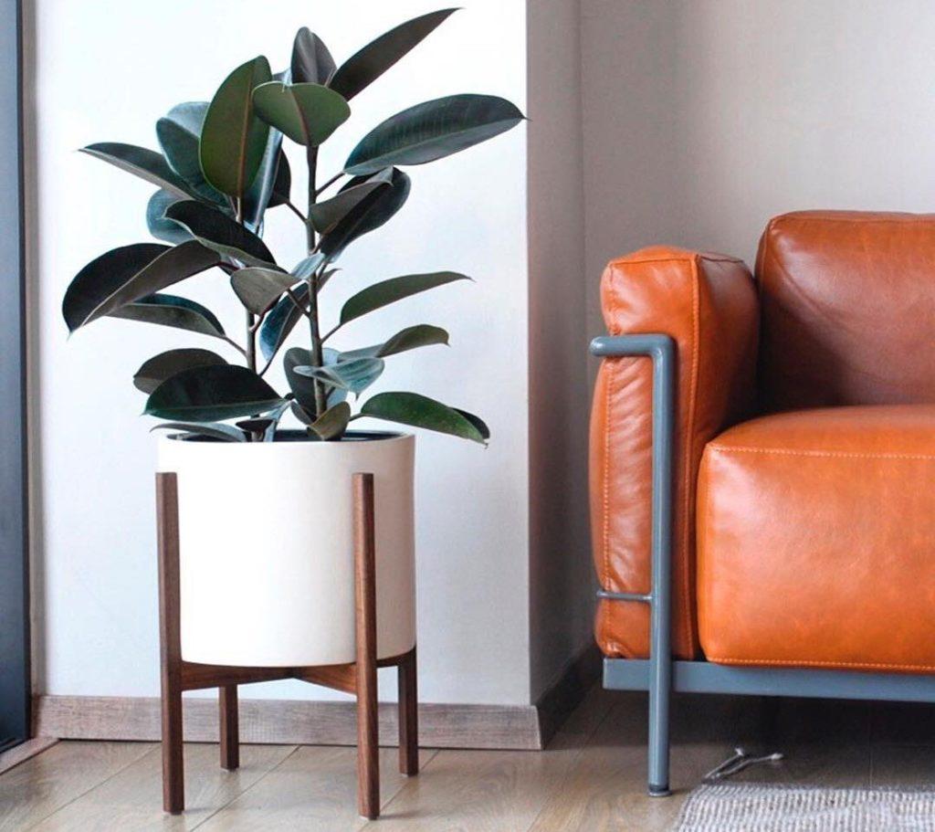 planta ornamental na sala