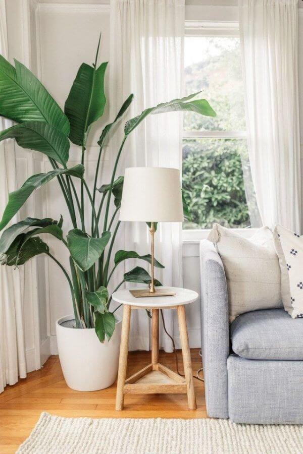 planta na lateral do sofá