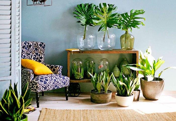 vegetação ornamental decorativa