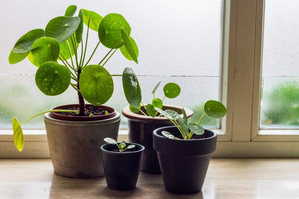 decoração com plantas pequenas