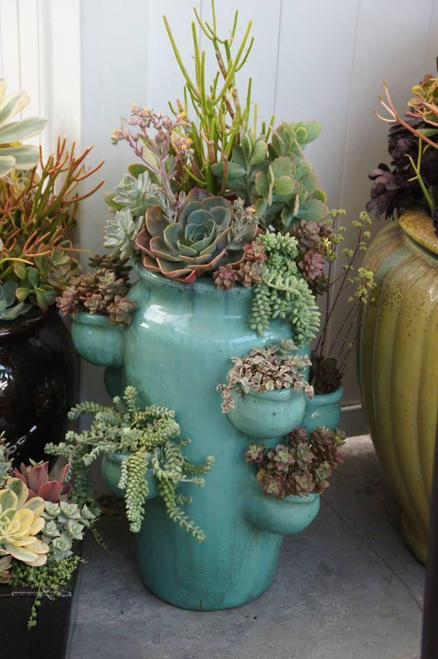 vaso personalizado com suculentas