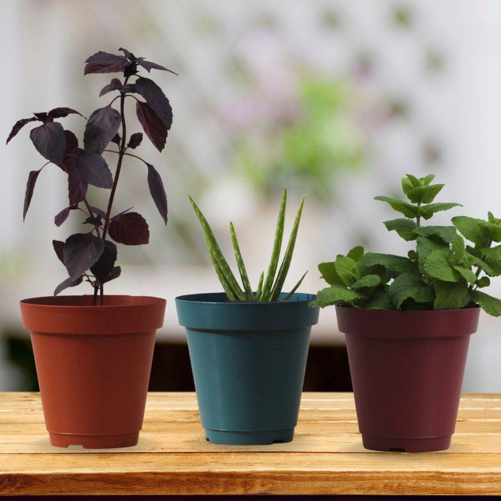 vasos pequenos com plantas