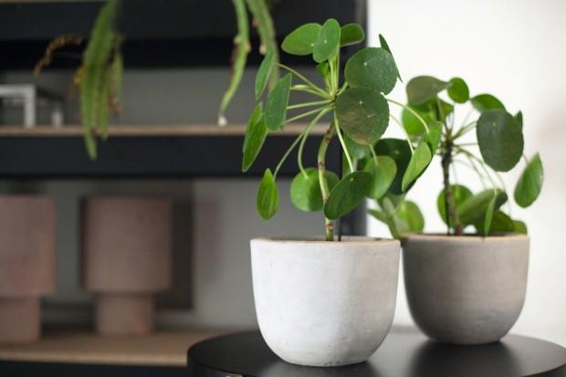 pequenas plantas decorativas
