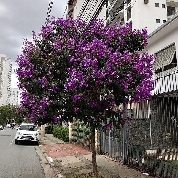 árvore com flor roxa