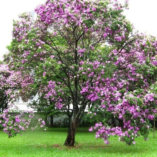 jardim com árvore