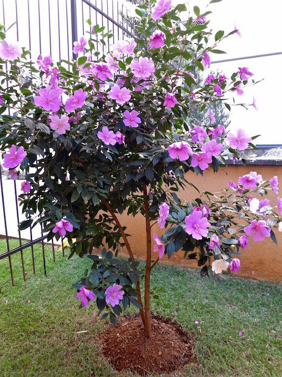 planta de jardim