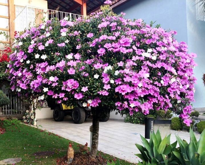 tons de flores para jardim