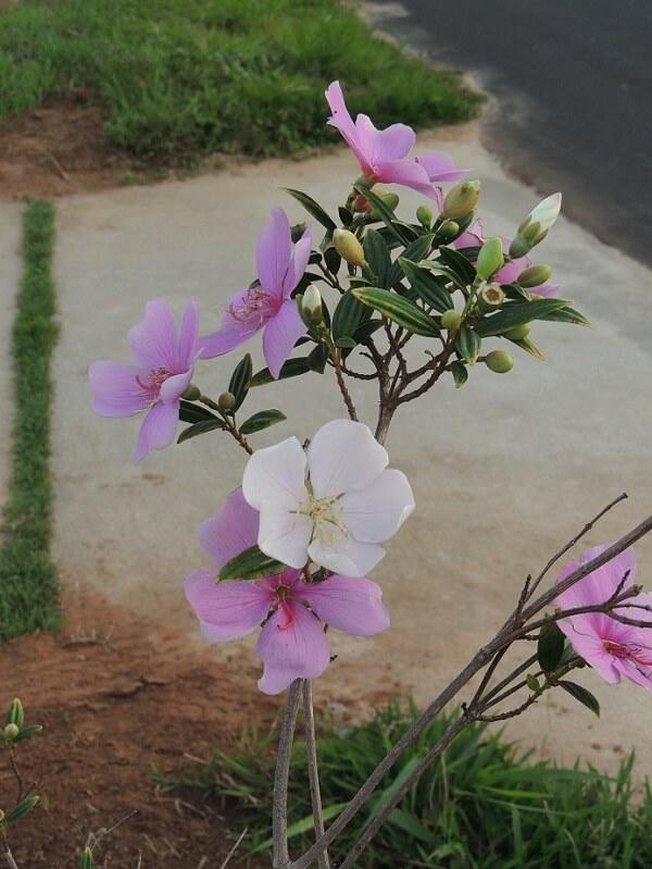 tons de flores
