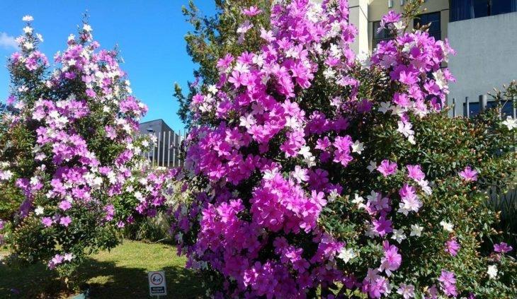 jardim com flores